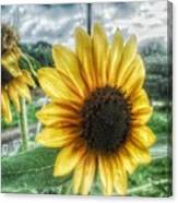 Sunflower In Town Canvas Print