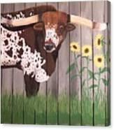 Sunflower Longhorn Canvas Print