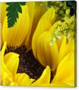 Sunflower Macro Canvas Print
