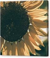 Sunflower Matte Canvas Print
