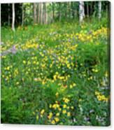 Sunflower Meadow Canvas Print