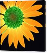 Sunflower Mosaic 1 Canvas Print