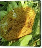 sunflower No.2 Canvas Print