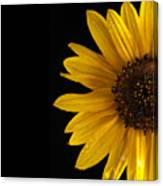 Sunflower Number 3 Canvas Print