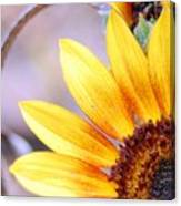 Sunflower Perspective Canvas Print