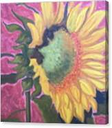 New Mexico Sunflower Canvas Print