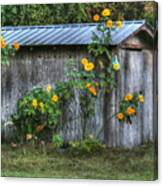 Sunflower Shed Canvas Print
