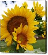 Sunflower Show Canvas Print