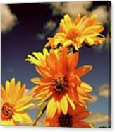 Sunflower Skies Canvas Print