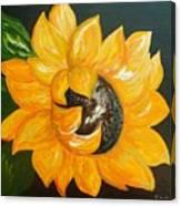 Sunflower Solo Canvas Print