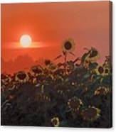 Sunflower Sundown Canvas Print