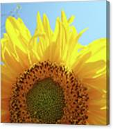 Sunflower Sunlit Sun Flowers Giclee Art Prints Baslee Troutman Canvas Print