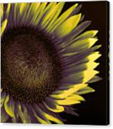Sunflower Dawn Canvas Print