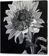 Sunflower Sutra Canvas Print