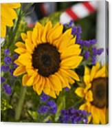 Sunflower Triplets Canvas Print