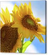 Sunflower Twins Canvas Print