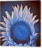 Sunflower Moonlight Canvas Print