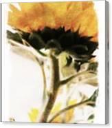 Sunflower Watercolor Canvas Print