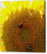 Sunflower With Bees Canvas Print
