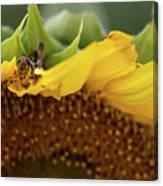 Sunflower With Grasshopper Canvas Print
