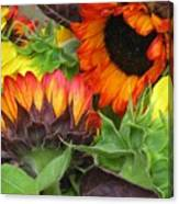 Sunflower2 Canvas Print