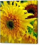 Sunflowers - Light And Dark Canvas Print