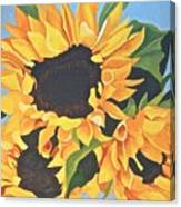 Sunflowers #3 Canvas Print