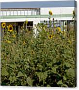 Sunflowers And Abandoned Gas Station Canvas Print