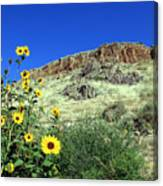 Sunflowers And Cliffs Canvas Print