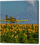 Sunflowers And Crop Duster Canvas Print