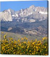 2a6742-sunflowers And Mount Humphreys  Canvas Print