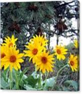 Sunflowers And Pine Cones Canvas Print