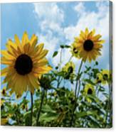 Sunflowers And The Bee Canvas Print