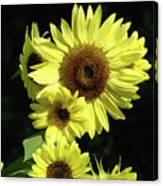 Sunflowers Art Yellow Sun Flowers Giclee Prints Baslee Troutman  Canvas Print