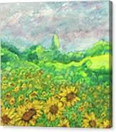 Sunflowers At Lop Burri Canvas Print