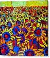 Sunflowers Field At Sunrise Canvas Print