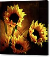 Sunflowers In Shadow Canvas Print