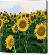 Sunflowers In The Clouds Canvas Print
