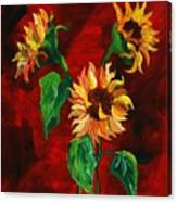 Sunflowers On Rojo Canvas Print