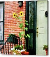 Sunflowers On Stoop Canvas Print