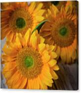 Sunflowers On White Boards Canvas Print