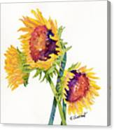 Sunflowers On White Canvas Print