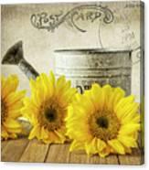 Sunflowers Postcard Canvas Print