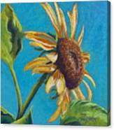 Sunflower's Shine Canvas Print