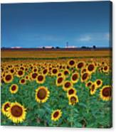 Sunflowers Under A Stormy Sky By Denver Airport Canvas Print