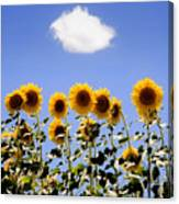 Sunflowers With A Cloud Canvas Print