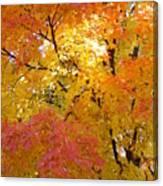 Sunkissed 2 Canvas Print