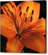 Sunkissed Lily Canvas Print