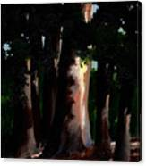Sunlight And Shadows - Eucalyptus Majesties Canvas Print
