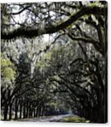 Sunlight And Shadows On Live Oaks Canvas Print